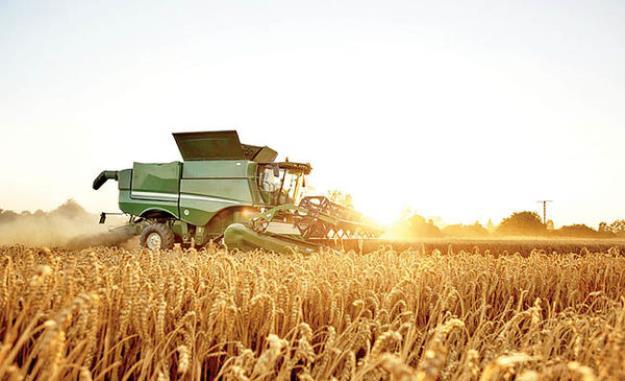 هشدار درباره کاهش تولید گندم در سال آینده