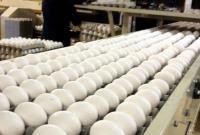قیمت هر شانه تخم مرغ در بازار 10 هزار تومان بالاتر از قیمت مصوب/ هر عدد تخم مرغ 1500 تومان شد!