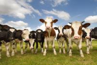 آینده تولید محصولات پروتئینی در معرض خطر است